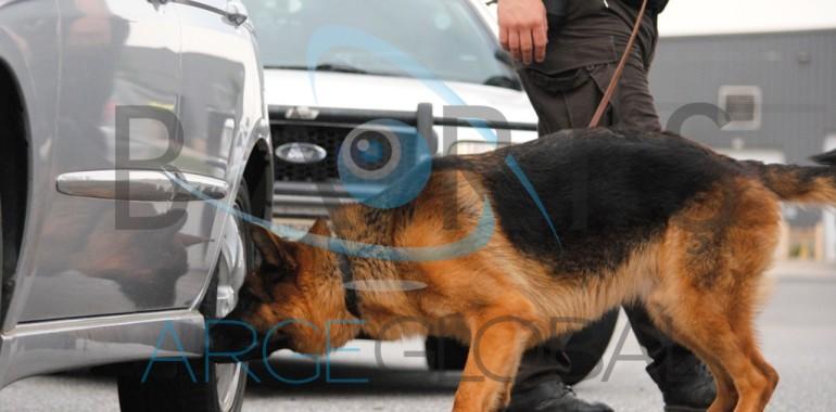 K9 Detektör İş Köpeği